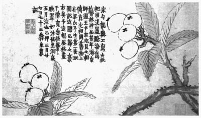 《花果册》图片均选自《草木缘情》