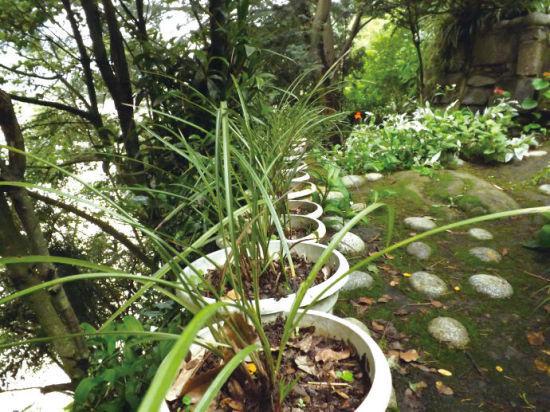 直至石梯最底层,几株浓密的阔叶大树包围着整个的园林景致.