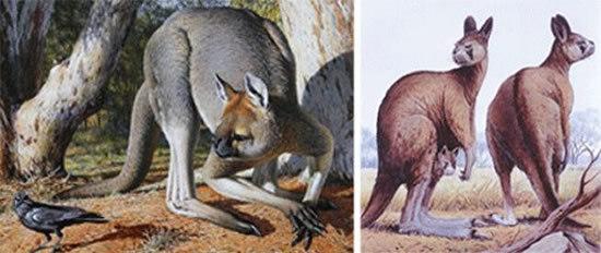 盘点十四种怪异动物:凶猛怪异体型强壮
