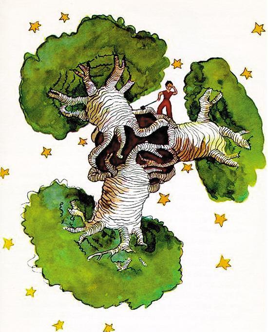 小王子的星球上长着猴面包树