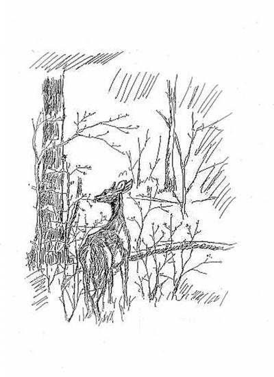 森林动物简笔画大全主题